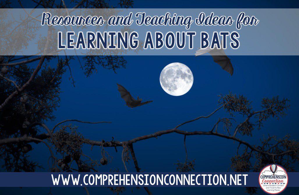 bats-2284404